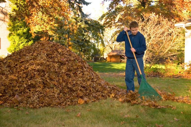 Boy Raking Leaves