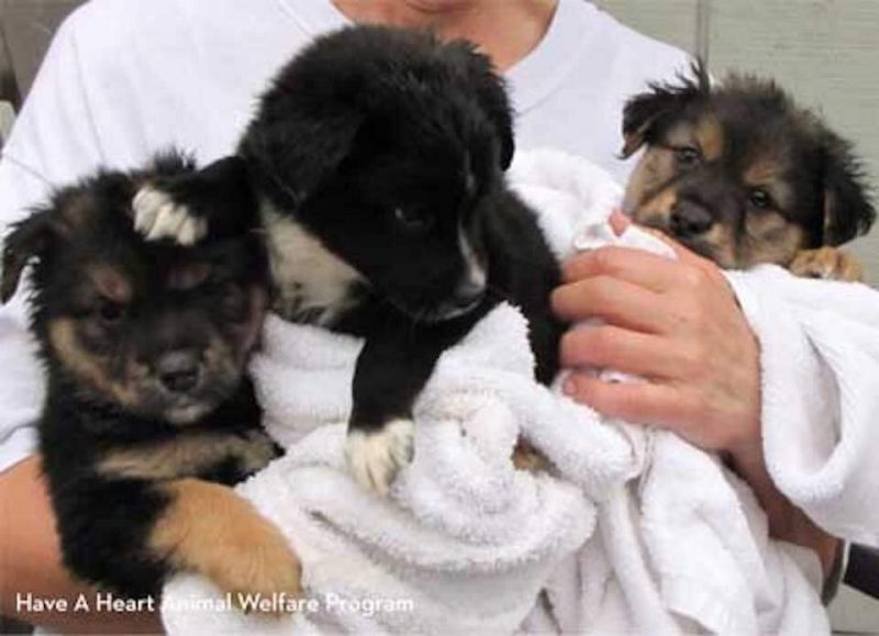 Puppies being cared for