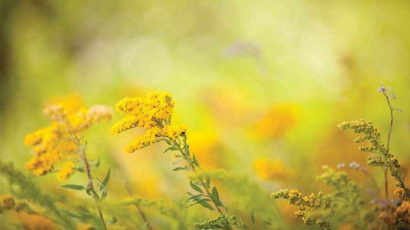 Seasonal Allergies Header